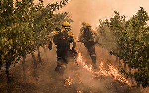 Cape Winelands fire damage